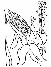 corn cob from mature plant coloring page coloring sun