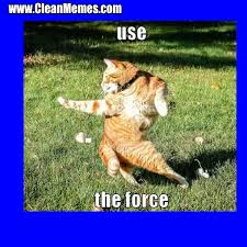 Clean Cat Memes - in cat memes clean funny cat memes pinterest cat memes