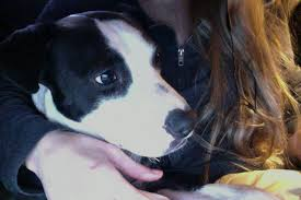Why Do Dogs Lick The Sofa Why Lick My Nose Questions I Ask My Dog Act Out With Aislinn