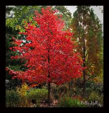 Best Trees For Backyard by 77 Best Trees And Focal Points Images On Pinterest Focal Points
