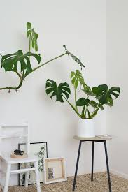 Urban Jungle Living And Styling by Best 25 Jungle Book Review Ideas On Pinterest Disney Movies On