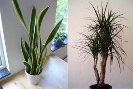 best house plants the best 7 indoor plants that purify the air