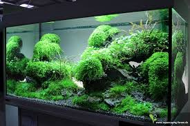 Tank Aquascape Aquascaping Tropical Fish Ta Sequa