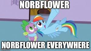 Everywhere Meme - mlp everywhere meme norbflower everywhere by cartoonanimes4ever
