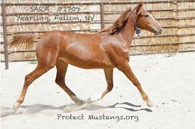 Wild Horses In America Map by Petition Defund And Stop The Wild Horse U0026 Burro Roundups