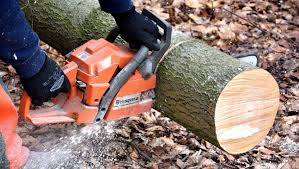 what does tree removal include eos outdoor services