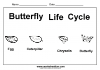 chrysalis free printable worksheets u2013 worksheetfun