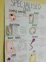 best 25 biology a level ideas on pinterest science notes a