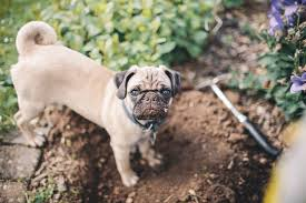 10 ways to keep dogs from destroying your flowerbeds