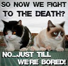 Cat Fight Meme - 132 best grumpy cat memes images on pinterest angry cat funny