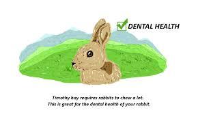 rabbit hay for optimal health small pet select