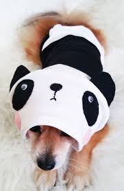 Cute Small Dog Halloween Costumes 29 Cute Dog Hoodies Images Small Dog Clothes
