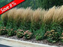 120 best ornamental grasses for simple gardening images on