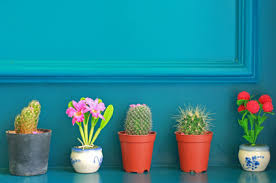brightnest houseplants on a budget 5 cheap and easy options