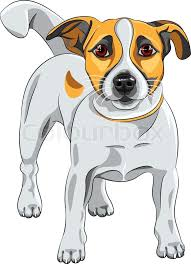 vector sketch dog jack russell terrier breed stock vector