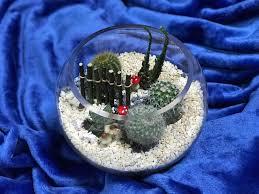 floral garage u2013 cactus terrarium u2013 jerlinda adnilrej
