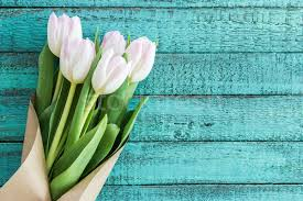 Wedding Flowers Background Light Pink Tulips Bouquet On Turquoise Wooden Tabletop With Copy