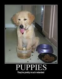 Puppy Memes - funny dog memes i top 50 of all time i world wide interweb