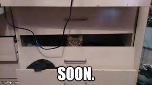 Soon Cat Meme - my sister awoke to this imgflip