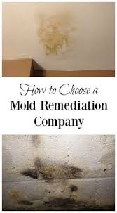 3935 best mold removal images on mold removal