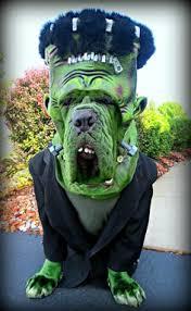 Ewok Dog Halloween Costume Dog Halloween Costume Contest Debbie Dog Halloween