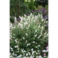 full sun perennials garden plants u0026 flowers the home depot