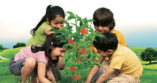 tomato farms come to india u0027s cities kissanpur by kissan