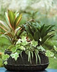 indoor plant arrangements single container arrangements of plants