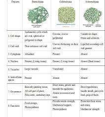 What Is Dead Tissue Called Plant Tissues Biology4isc
