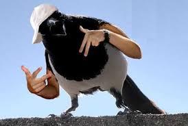 Meme Bird - birds with arms meme sherhaps