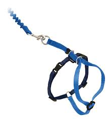 come with me kitty harness and bungee leash by petsafe grp cwmk