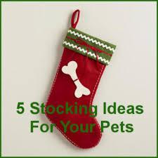 christmas stocking ideas pet christmas stockings 5 stocking ideas for your pet petslady com