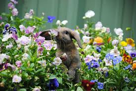 these 25 adorable animals sniffing flowers will make your day