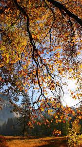 imagenes de otoño para fondo de escritorio otoño árbol ramas hojas sol iphone fondos de pantalla 750x1334