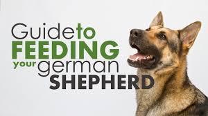 best dog food for german shepherds top 4 picks 2017