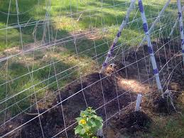 trellis solutions for cucumbers melons and tomatoes