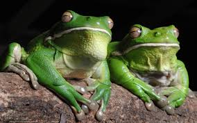 frogs dreams meaning interpretation and meaning