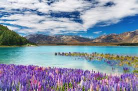 flower places world s best places to see beautiful flowers smartertravel