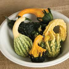 gourd seeds organic varieties johnny s selected seeds