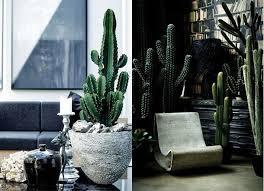 biggest house plants cactus types la pinterest cactus types and cacti