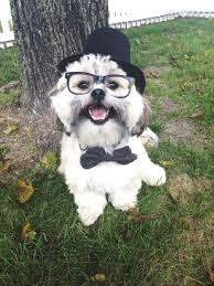 target dog halloween costumes the most adorable dressed up pets you u0027ll ever see