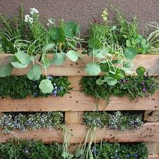 using hanging baskets for growing herbs and vegetables blog