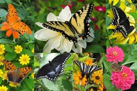 butterfly garden flowers gallery outdoor furniture beautiful