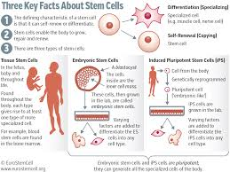 stem cell research trends in and perspectives on the evolving