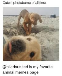 Cutest Memes - cutest photobomb of all time is my favorite animal memes page