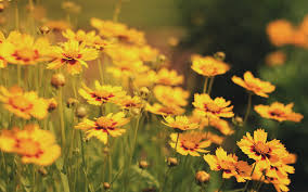 Beautiful Flower Pictures Beautiful Flower Field Background 13407 Flower Power Pinterest