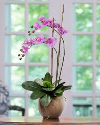 Home Decor Accesories Home Decor Accessories That You Will Love Petals Com Blog