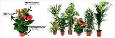 plante d駱olluante chambre plante d interieur depolluante plante depolluante plante dinterieur