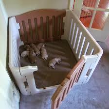puppy bedding 19 best duvets images on pinterest duvet cover sets
