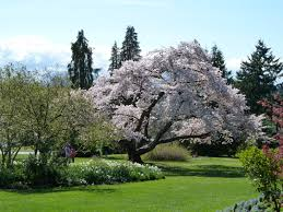 Botanical Gardens Ubc by British Columbia Vcbf Tree Talks And Walks This Weekend April